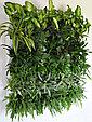 Фитостена вертикальная из живых растений, фото 4