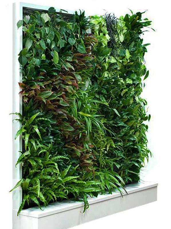 Фитостена вертикальная из живых растений