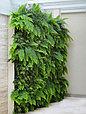 Фитостена вертикальная из искусственных растений, фото 3