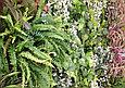 Фитостена вертикальная из искусственных растений, фото 4