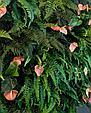 Фитостена вертикальная из искусственных растений, фото 8