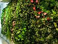 Зеленая стена искусственная, фото 4