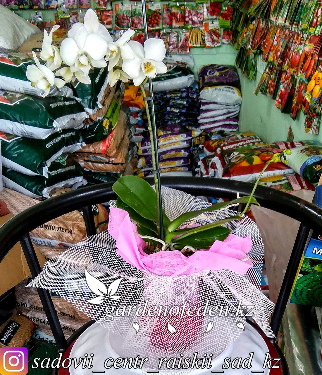 """Орхидея """"Фаленопсис"""" (в стеклянной вазе с декором)"""
