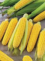 """Семена кукурузы Трофи F1 5000 шт. """"Seminis"""""""