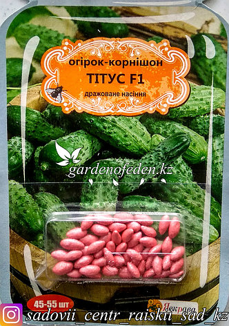 """Семена пакетированные Яскрава (дражированные). Огурец """"Титус F1""""., фото 2"""