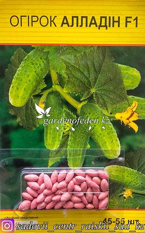 """Семена пакетированные Яскрава (дражированные). Огурец """"Алладин F1""""., фото 2"""