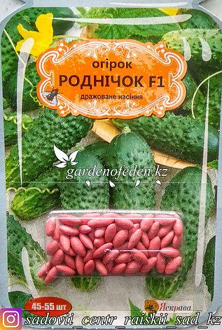 """Семена пакетированные Яскрава (дражированные). Огурец """"Родничок F1""""., фото 2"""