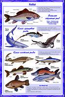 Биология. Животные 7 класс, плакаты, фото 1