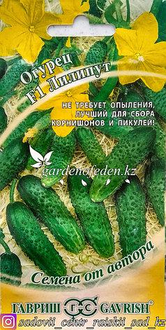 "Семена пакетированные Гавриш. Огурец ""Лилипут F1""., фото 2"