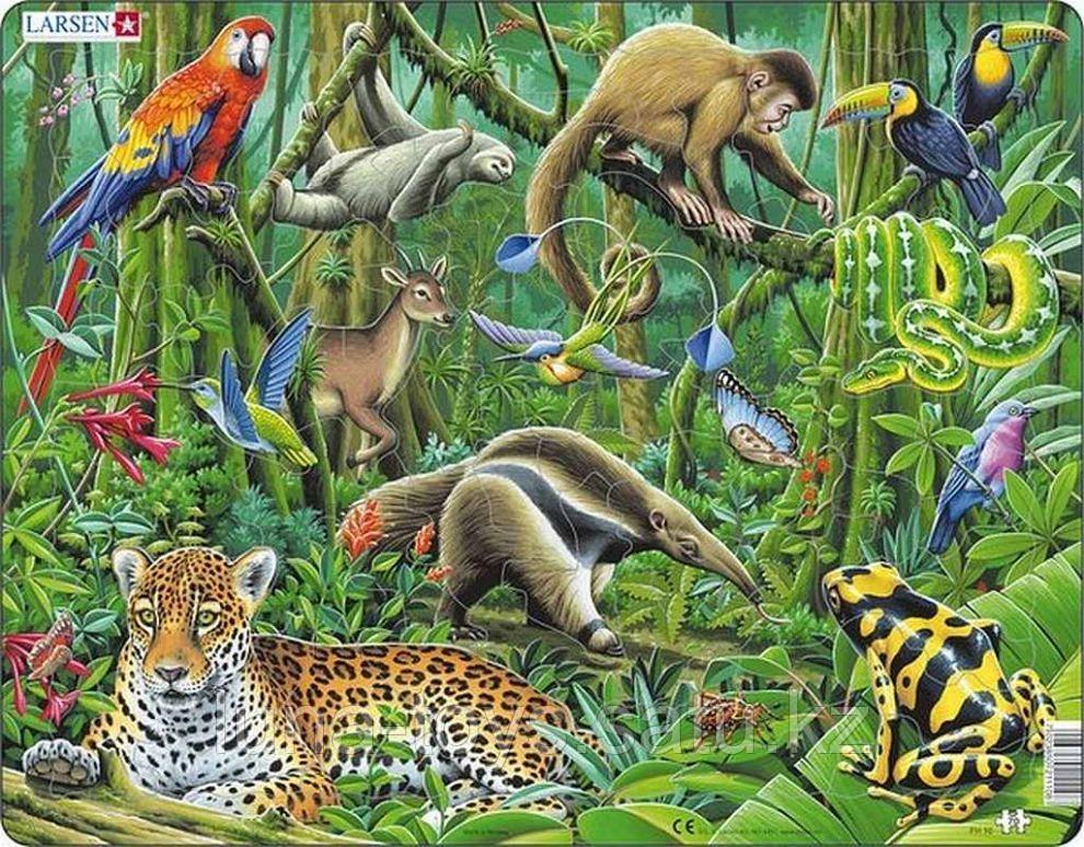 Южно-американские тропики FH10(пазлы)