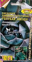 """Семена пакетированные Euro Extra. Эхеверия пекокка (Толстянка) """"Голубая звезда""""."""