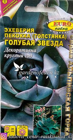 """Семена пакетированные Euro Extra. Эхеверия пекокка (Толстянка) """"Голубая звезда""""., фото 2"""