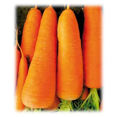 """Семена моркови  SV7381 F1 (1.6-1.8) 1 000 000 шт. """"Seminis"""""""