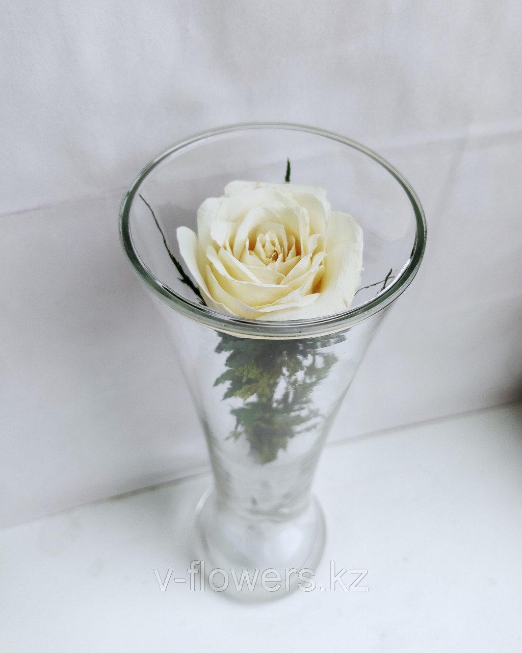 Живые цветы в стекле CuHRw