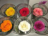 Живые цветы в стекле CuHRp-2, фото 4