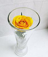 Живые розы 22 см в стекле CuHRy