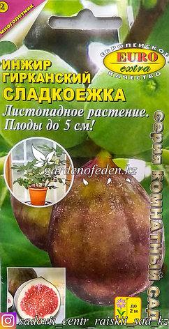 """Семена пакетированные Euro Extra. Инжир гирканский """"Сладкоежка"""", фото 2"""