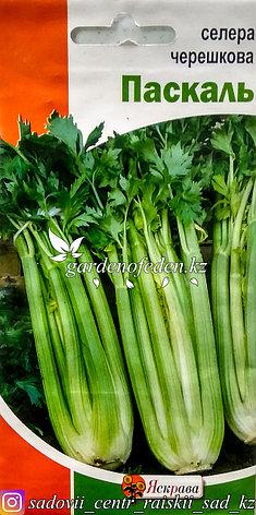 """Семена пакетированные Яскрава. Сельдерей черешковый """"Паскаль"""", фото 2"""