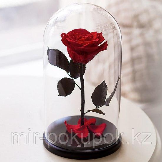 Роза в колбе Красная, Большая, Алматы