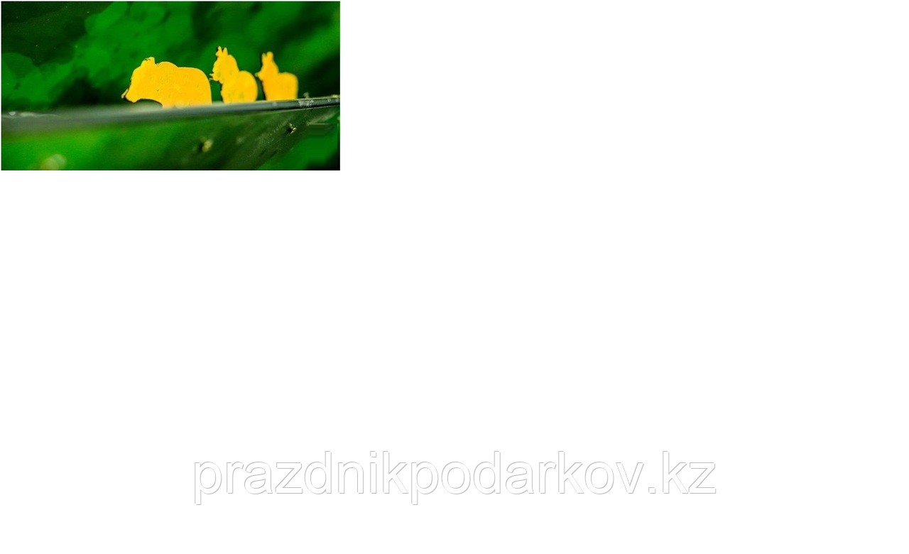 ТИР для Охотников (Охота на утку / зайца / лося / кабана)