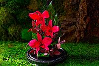 """Стабилизированная композиция из орхидей """"Букет весны"""""""