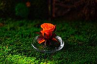 Роза в лимоннице (стабилизированная)