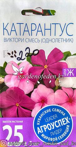 """Семена пакетированные Агроуспех. Катарантус """"Виктори смесь"""", фото 2"""