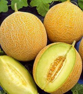 Семена дыня Медовый спас (банка - 0.5кг - 12500шт)