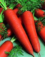 Семена морковь Шантенэ Роял (банка-500 гр- 425000 шт)