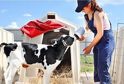 Заменители цельного молока для КРС