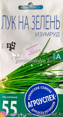 """Семена пакетированные Агроуспех. Лук на зелень """"Изумруд"""", фото 2"""