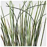 ФЕЙКА Искусственное растение в горшке, трава, фото 4