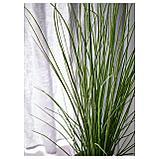 ФЕЙКА Искусственное растение в горшке, трава, фото 5