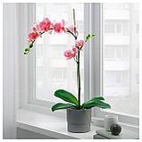 ФЕЙКА Искусственное растение в горшке, Орхидея розовый, фото 3