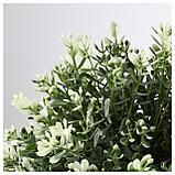 ФЕЙКА Искусственное растение в горшке, чабрец, фото 2