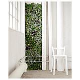 ФЕЙКА Растение искусственное, настенный, д/дома/улицы зеленый, фото 4