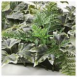 ФЕЙКА Растение искусственное, настенный, д/дома/улицы зеленый, фото 5