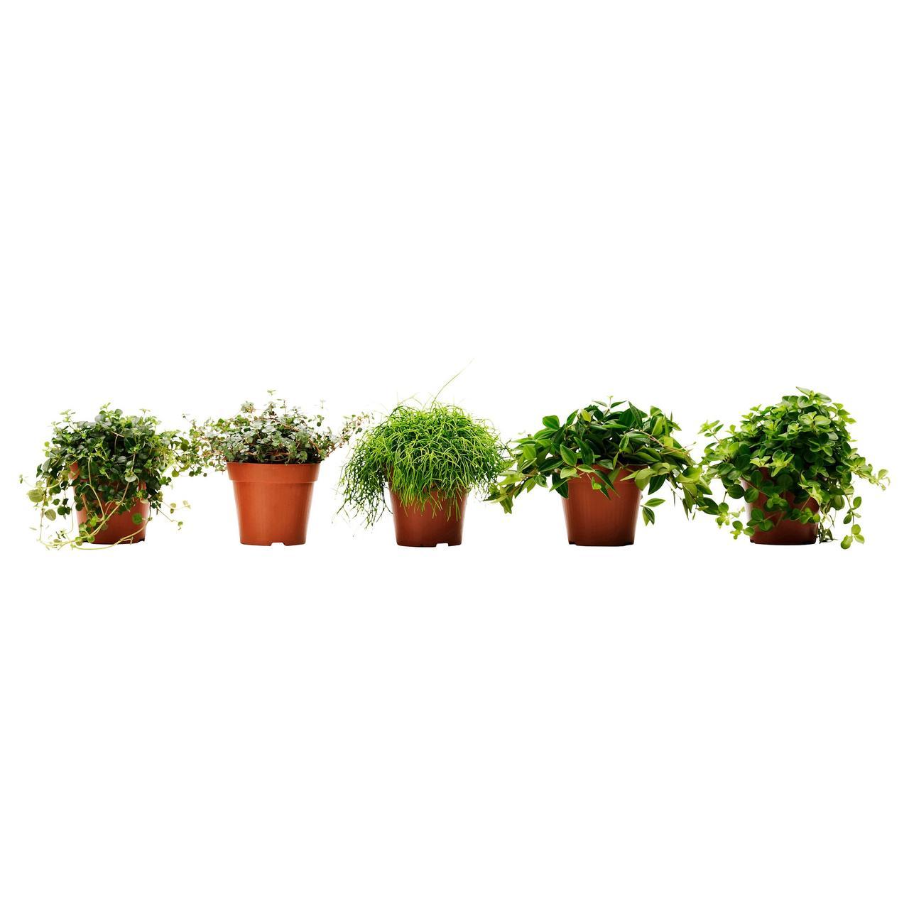 ГИМАЛАЙАМИКС Растение в горшке, различные растения