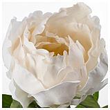 СМИККА Цветок искусственный, Пион, белый, фото 2