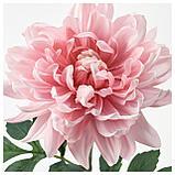 СМИККА Цветок искусственный, Георгин, светло-розовый, фото 2