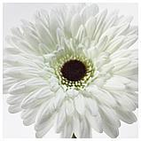 СМИККА Цветок искусственный, Гербера, белый, фото 2