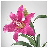 СМИККА Цветок искусственный, лилия, розовый, фото 3