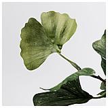 СМИККА Цветок искусственный, Гинкго, зеленый, фото 3