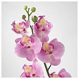 СМИККА Цветок искусственный, Орхидея, розовый, фото 3