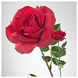 СМИККА Цветок искусственный, роза, красный, фото 3