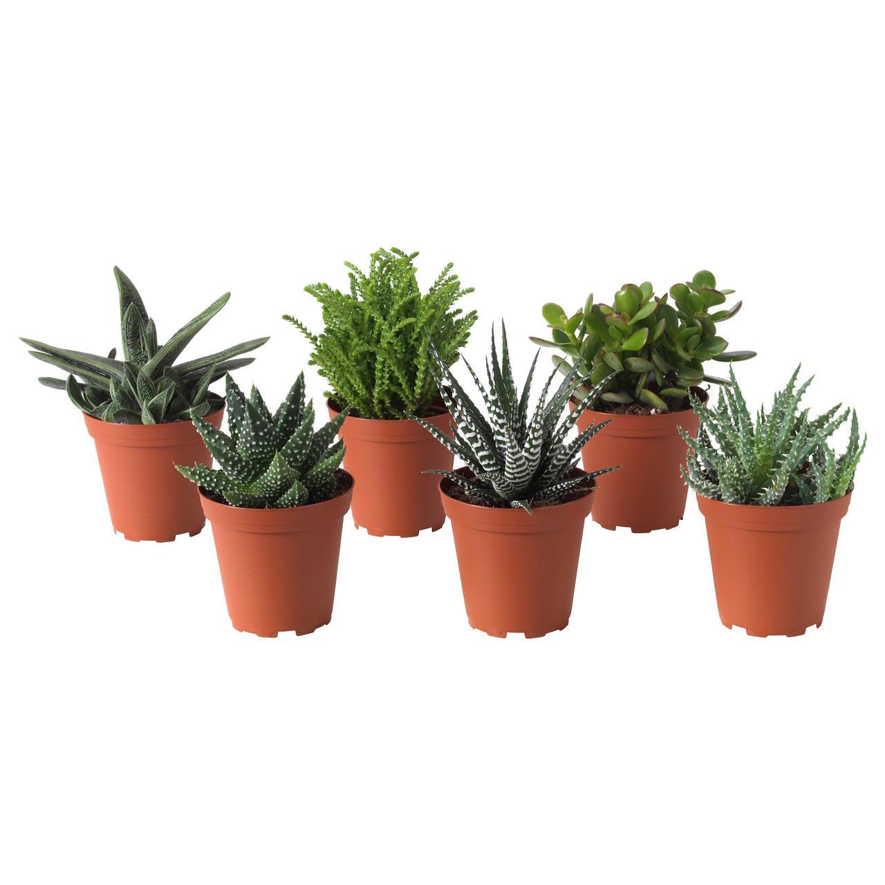 СУККУЛЕНТЫ Растение в горшке, различные растения