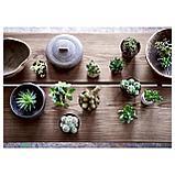 СУККУЛЕНТЫ Растение в горшке, различные растения, фото 3