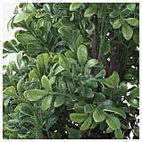 ФЕЙКА Искусственное растение в горшке, д/дома/улицы самшит, фото 4
