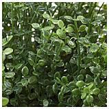 ФЕЙКА Искусственное растение в горшке, д/дома/улицы Солейролия, фото 2