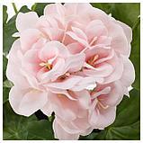 ФЕЙКА Искусственное растение в горшке, д/дома/улицы, Герань розовый, фото 2